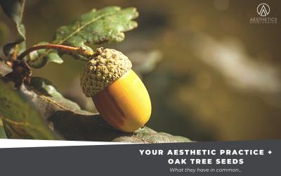 Your Aesthetic Practice & Oak Tree Seeds